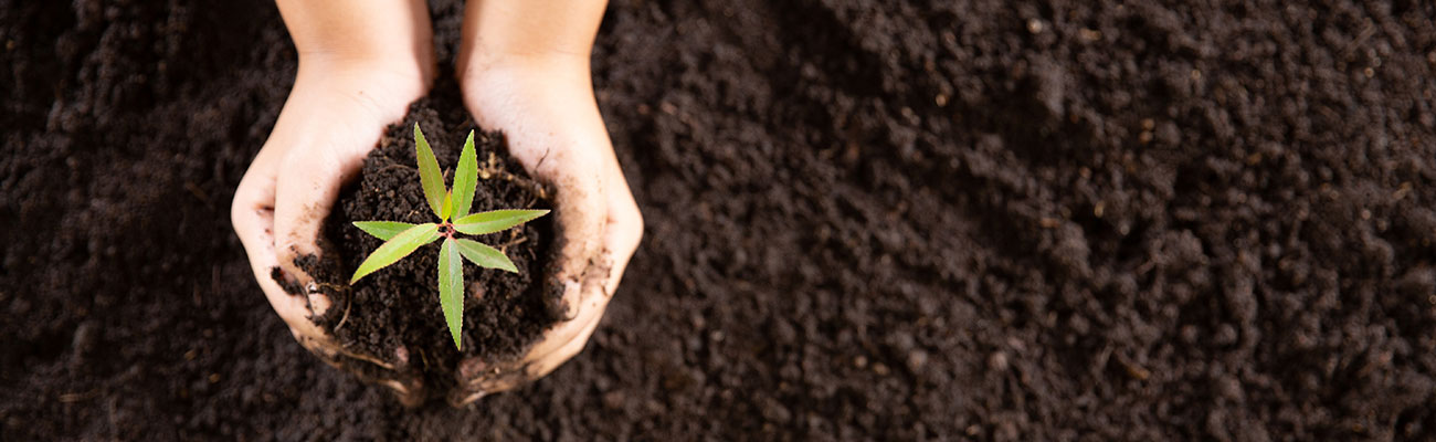 Sustainability and CSR